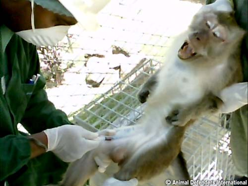Brutality Of Lab Monkey Supply Exposed Jan Creamer